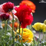 Blumen im Kurpark