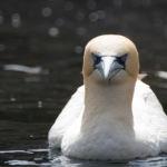 Zoo am Meer Bremerhaven Basstoelpel